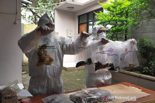 Karantina Pertanian Surabaya musnahkan ratusan burung asal Ende