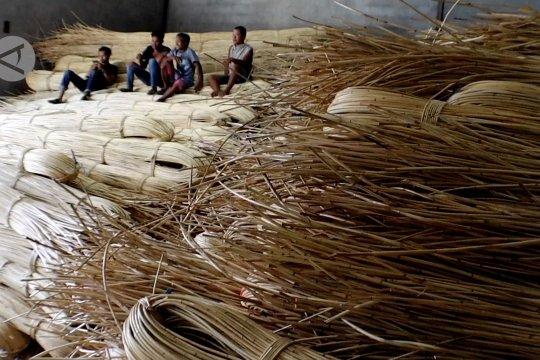 Bea Cukai gagalkan ekspor ilegal 100 ton rotan batangan