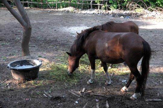 Horses of Gili, upaya selamatkan kuda pekerja Gili