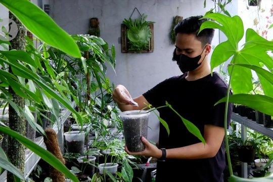 Meraup untung dari bisnis tanaman hias