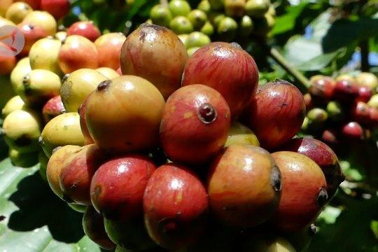 Upaya DPD RI buka akses pasar internasional bagi kopi Temanggung