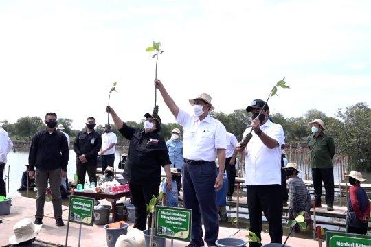 Pemerintah resmi mulai program percepatan rehabilitasi mangrove nasional