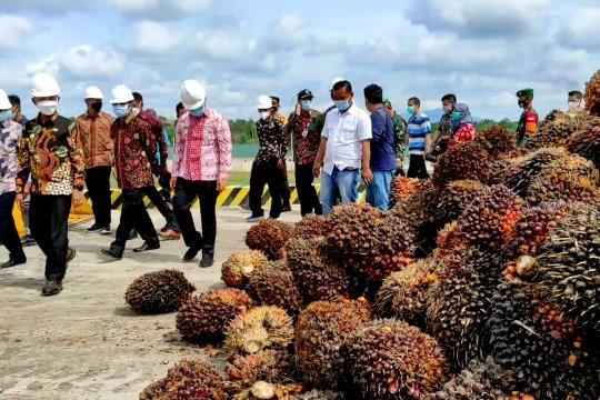 Keberadaan pabrik sawit ketujuh di Bangka tekan angka pengangguran