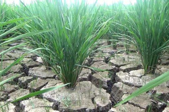 Pompa air pinjam pakai solusi kekeringan lahan pertanian di Aceh Utara