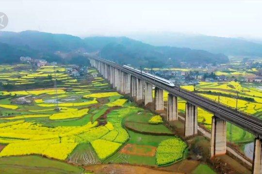 Kereta peluru China melaju lintasi ladang bunga rapa