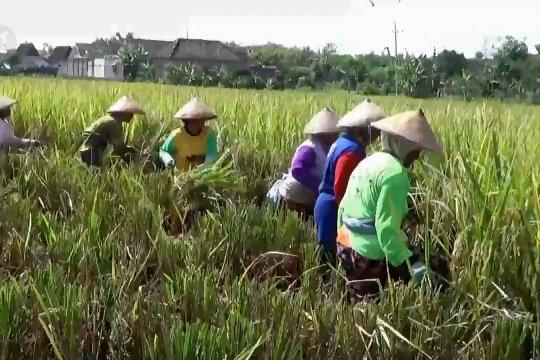 Pemkab Ngawi minta pemerintah pusat katrol harga beras