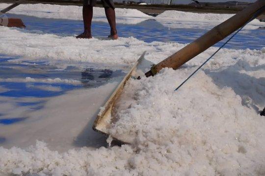 HMPG minta pemerintah kaji ulang kebijakan impor garam