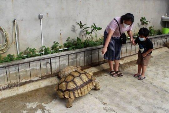 Mengisi akhir pekan di penangkaran kura-kura Palembang