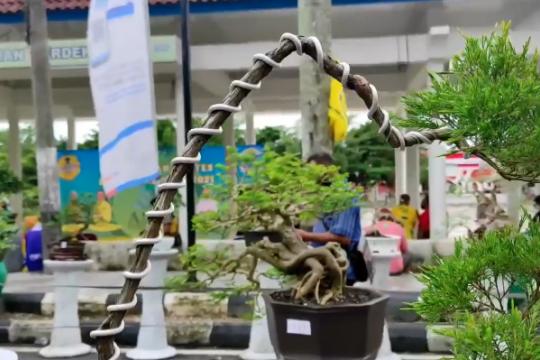 Bonsai, penghilang kejenuhan warga Bangka saat pandemi