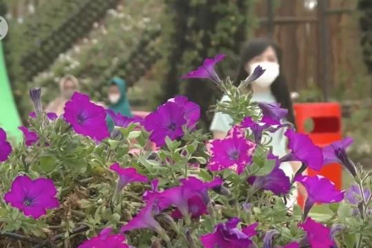 Menyegarkan mata dengan 600 jenis bunga di Kota Batu
