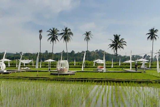 Wisata pertanian yang melipatgandakan penghasilan