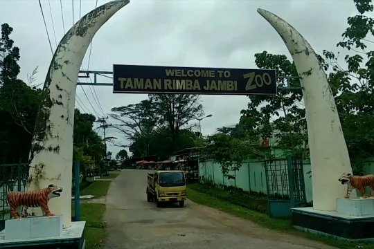 Dinas TPHP ajukan pemindahan pengelolaan kebun binatang Jambi