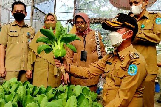 Pemkab Bangka panen sayur hidroponik di kebun percontohan