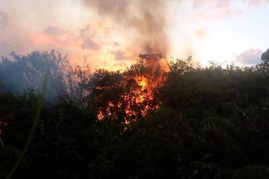 Kebakaran lahan gambut kembali terjadi di Aceh Barat