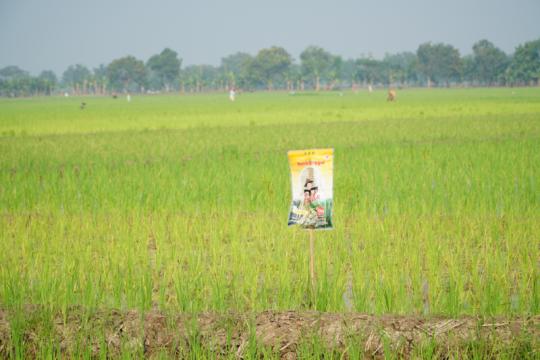 PT Pertani dipercaya pasok benih bagi 380 ribu hektare sawah