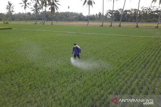 Kementan: Pupuk subsidi tingkatkan produksi beras nasional