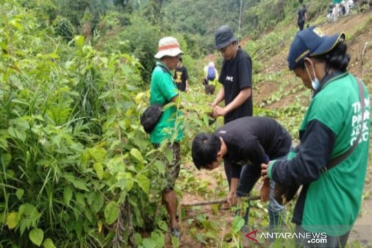 700 pohon Enau Balangan di tanam di Loksado dan Piani