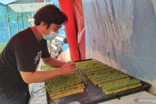 Pemkot Jakarta Barat edukasi warga jadi petani hidroponik selama PPKM