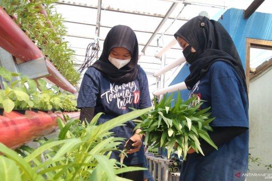 """Mendulang rupiah dari """"urban farming"""""""