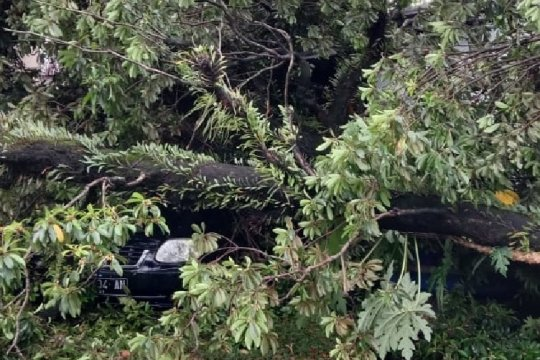 Padang dilanda angin kencang, puluhan pohon tumbang