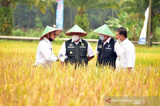 Menteri Pertanian ikut panen raya padi di OKU Timur