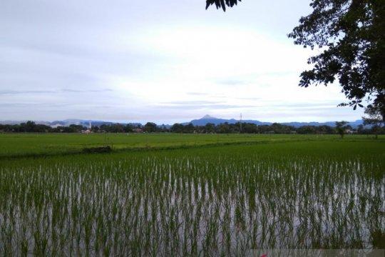 Bulog: Stok beras Sulselbar melimpah hingga 40 bulan