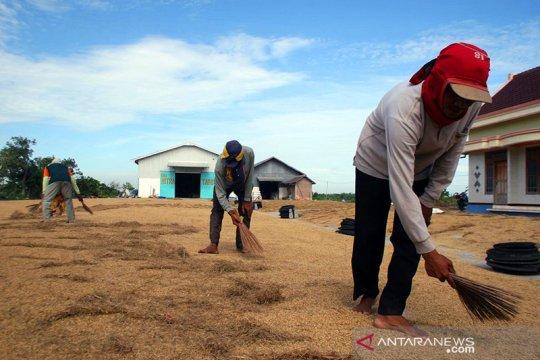 Pemkab Lamongan dorong harga gabah di tingkat petani sesuai HPP