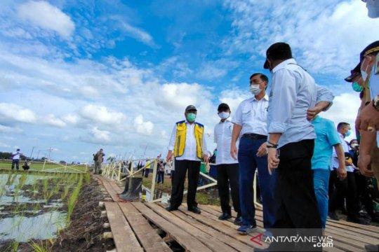 """98,8 persen """"food estate"""" Kalteng telah ditanami padi dan sudah panen"""