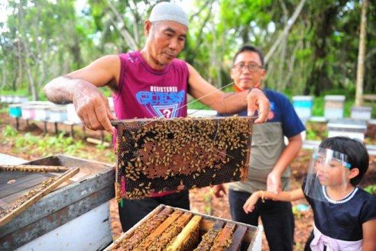 Riset PEI: Populasi lebah turun 57 persen
