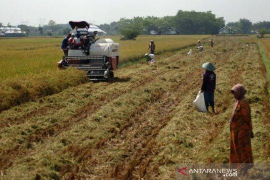 Yayasan Dharma Bhakti Astra ajak milenial optimalkan bisnis pertanian