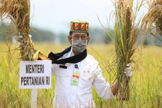 Aceh Besar siapkan 5.120 hektare lahan untuk kawasan food estate