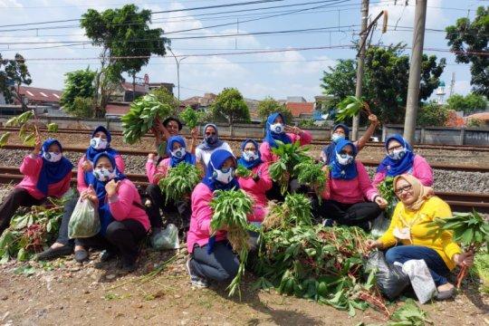"Warga RT04 Cipinang panen raya ""urban farming"" pinggir rel kereta"