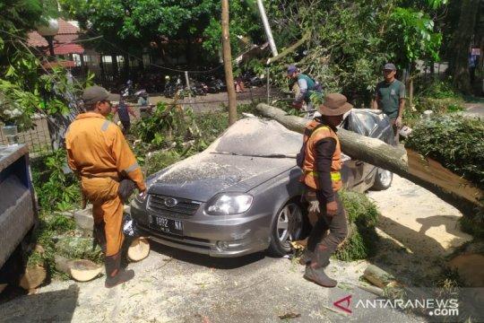 Diterpa angin kencang, pohon besar tumbang timpa lima mobil di Bandung