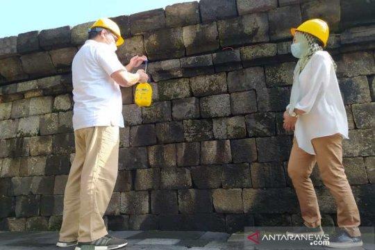 Minyak atsiri resmi bahan konservasi batuan Candi Borobudur
