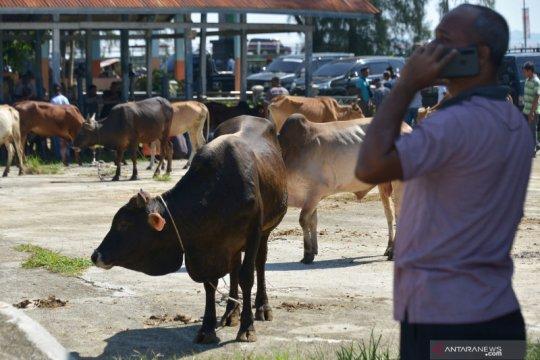 Penjualan hewan ternak jelang tradisi Meugang di Aceh