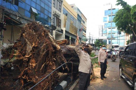 Pohon tumbang timpa satu mobil di Kebayoran Lama