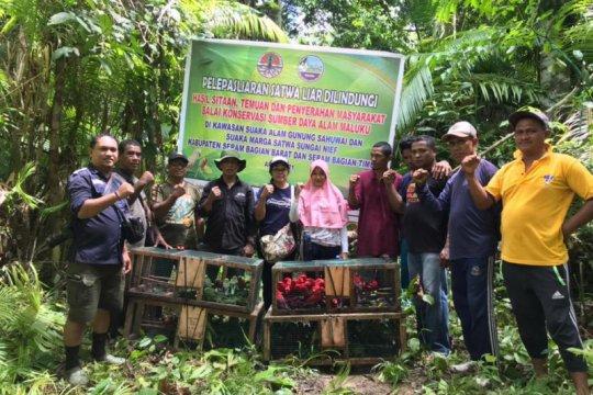 BKSDA Maluku lepaskan ratusan satwa liar