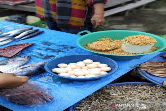 BKSDA Sulsel akan cek penjualan telur penyu di Majene