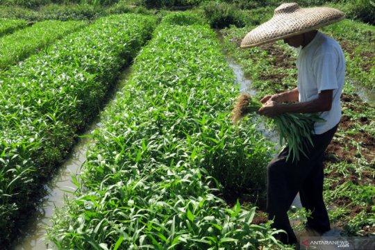 Peneliti: Perluas akses pasar produk pertanian saat pandemi