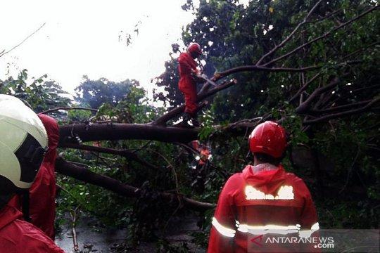 DKI sepekan, pohon tumbang hingga Jakarta masuk kota termahal