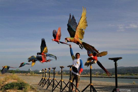 Komunitas Free Fly burung macau