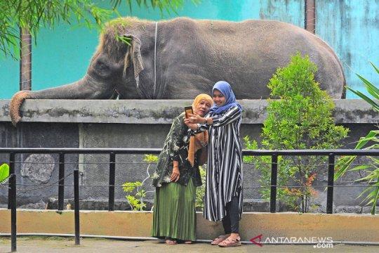 Pemindahan pengelolaan kebun binatang Jambi