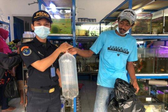 """KKP amankan 24 """"ikan bajak laut"""" di Tarakan Kaltara"""