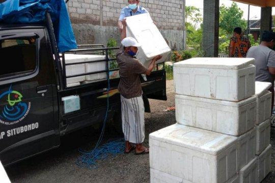 KKP serahkan bantuan 2,3 juta benur udang ke petambak di Tuban Jatim