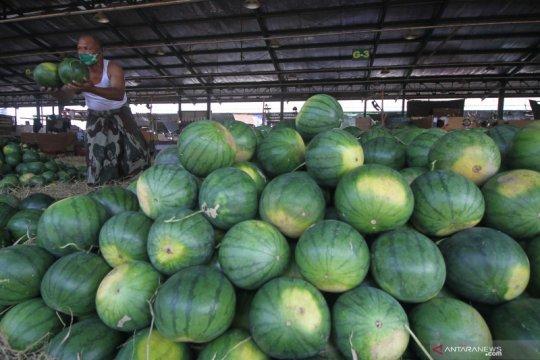 Mendag lepas ekspor perdana produk semangka ke Uni Emirat Arab