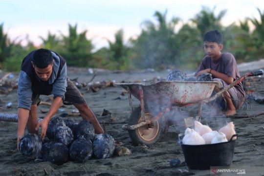 Kelapa bakar khas Ramadhan di Aceh Barat