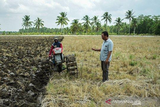 Mempertanyakan wacana subsidi harga gabah bagi petani