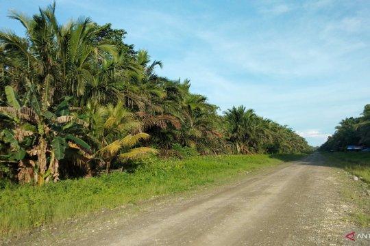 Pemkab Sorong mencabut izin empat perusahaan kelapa sawit