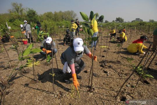 Tanam seribu mangrove sambut peringatan Hari Bumi