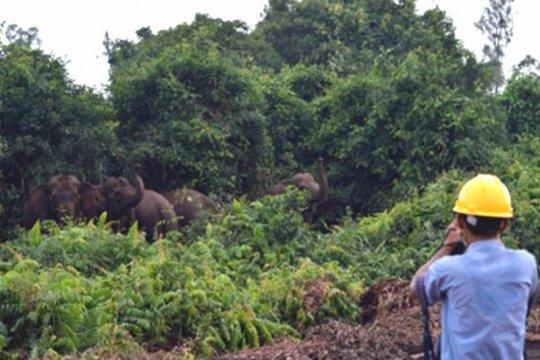Perusahaan HTI di Sumsel pastikan jaga habitat gajah sumatera